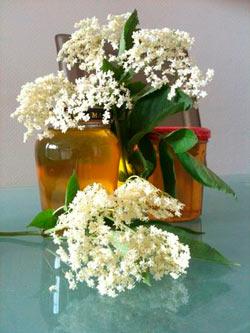 fleurs de sureau - plante médicinale anti-inflammatoire, anti